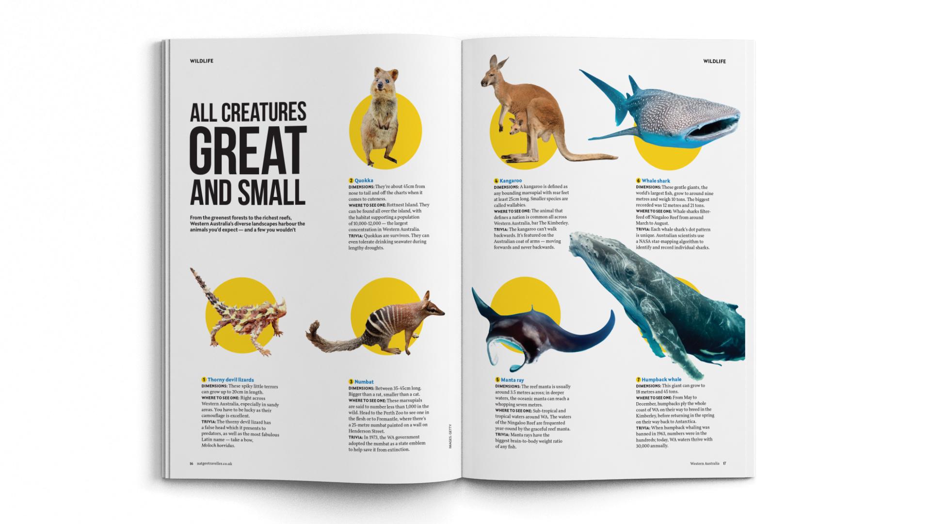 A4-Magazine-DPS-NGT-WA-Creatures